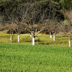 Come closer, photographs of the campo Serrano, Ronda, Andalusia