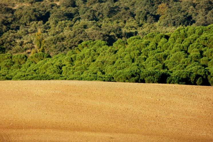 Walking near holiday home casa Vallecillo in Ronda area, Andalusia