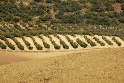 Come closer, photographs of the campo Serrano, Ronda, Andalusia
